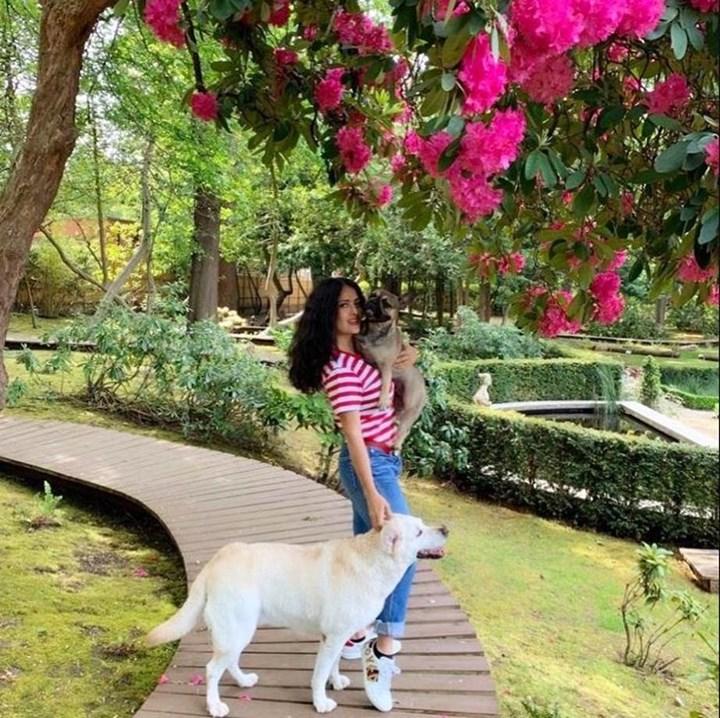 Salma Hayek walking her dogs